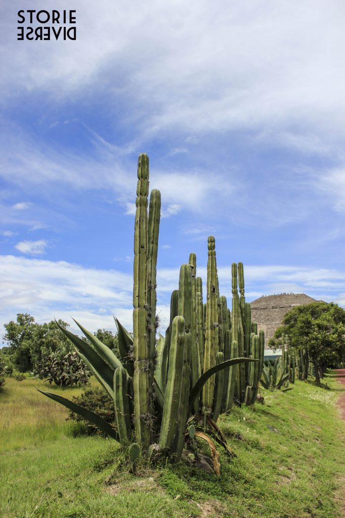 MG_9300-683x1024 Teotihuacan - Città del Messico