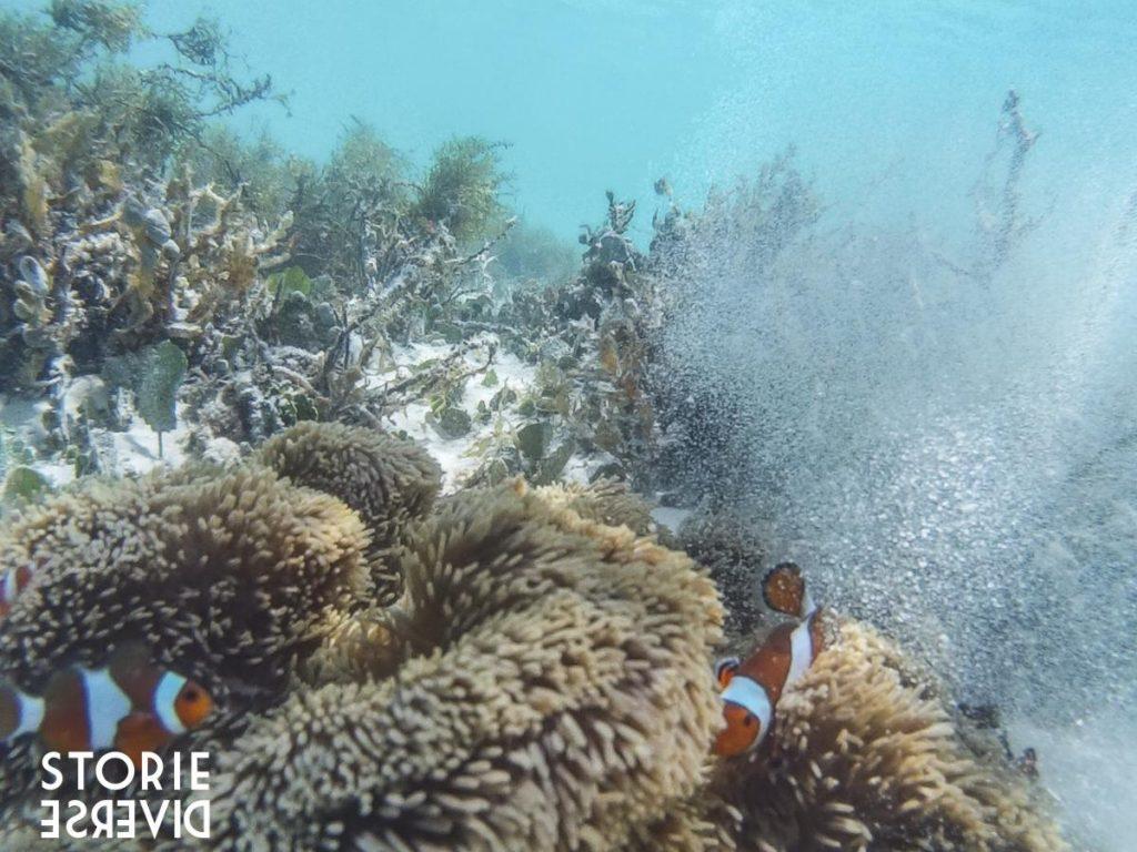 nemo-1024x768 Le isole Karimunjawa - Indonesia | Guida fai da te