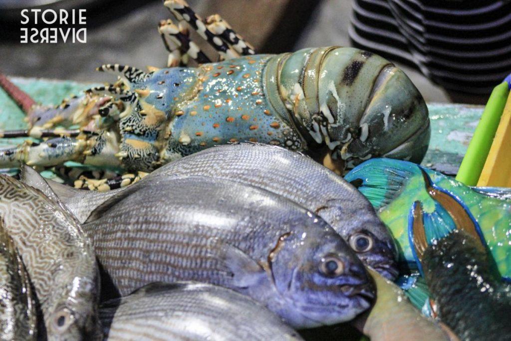 pesce-1024x683 Le isole Karimunjawa - Indonesia | Guida fai da te