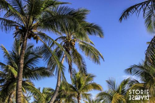 MG_7902 Isla Mujeres - vita da isolani