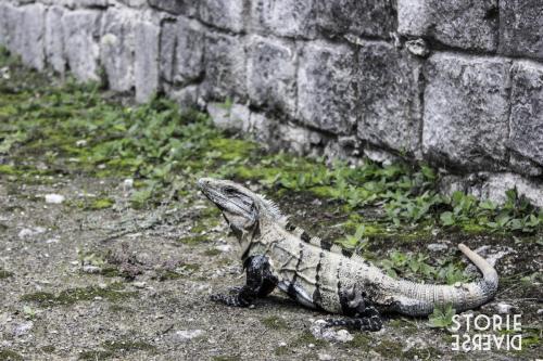 MG_8149 Chichén Itzá