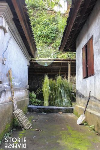 _MG_1480 Goa Gajah: la Grotta dell'elefante | Bali