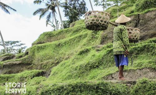 _MG_1720-2 Bali e le sue risaie