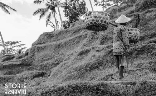 _MG_1720 Bali e le sue risaie