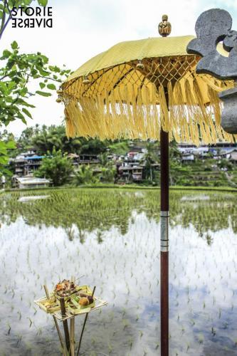 _MG_1776 Bali e le sue risaie